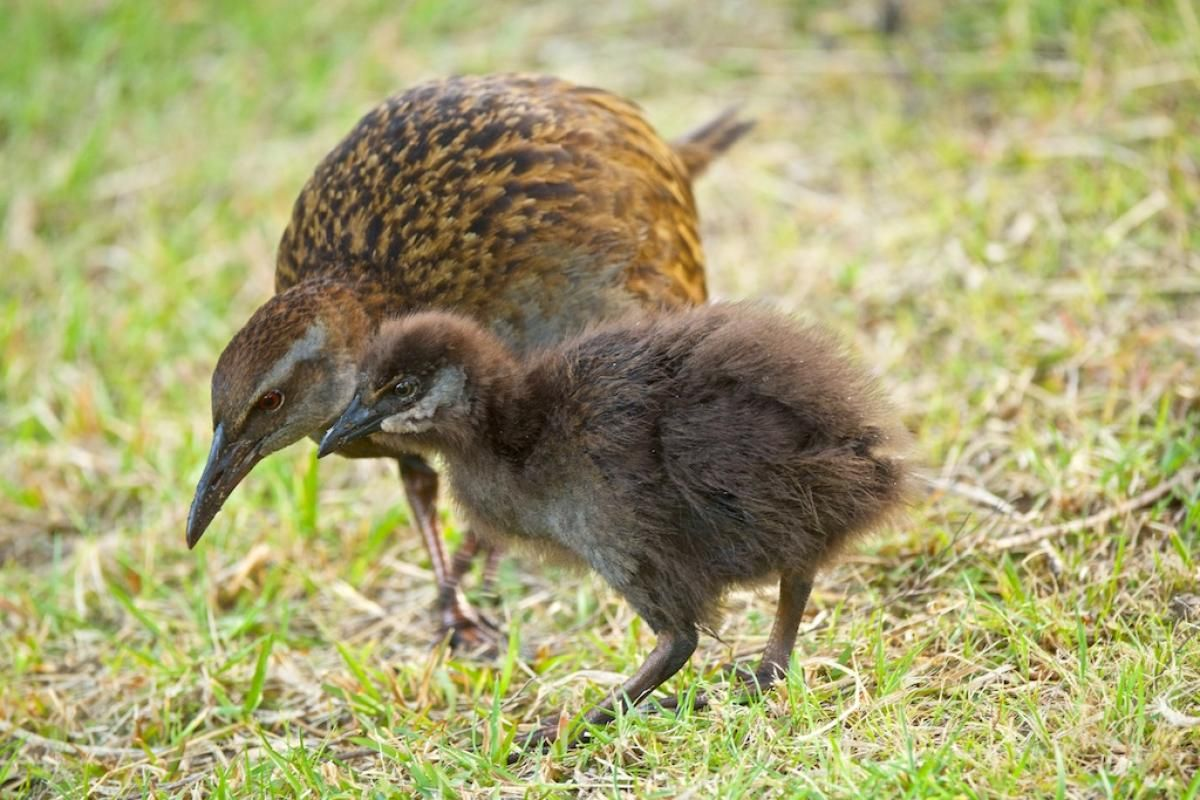 The Cheeky Weka Bird | Blog Post | Anchor Down B&B