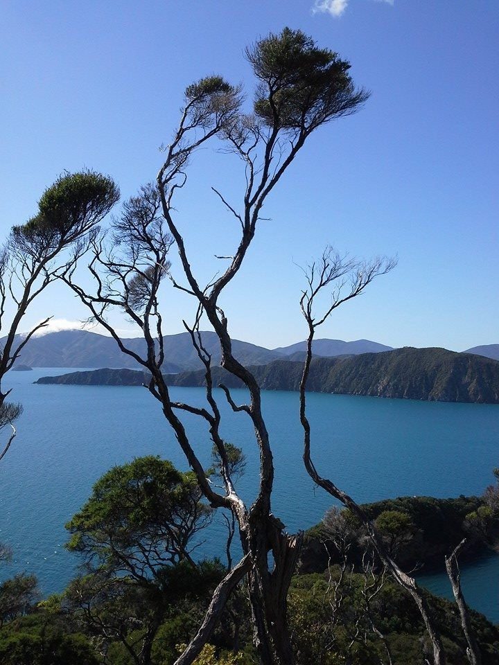Walking the Queen Charlotte Track | Anchor Down B&B